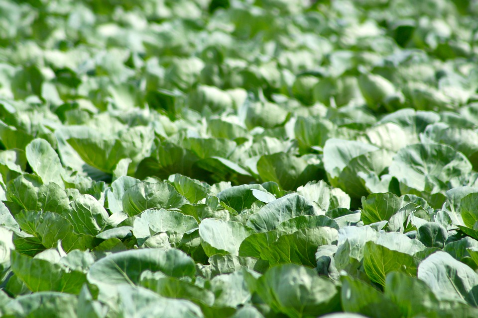 a-guide-to-growing-your-own-vegetables